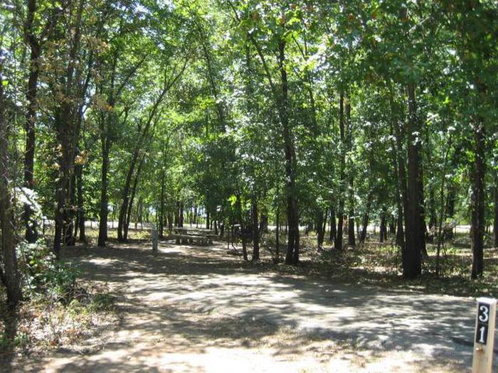 Osage Cove Campsite #31