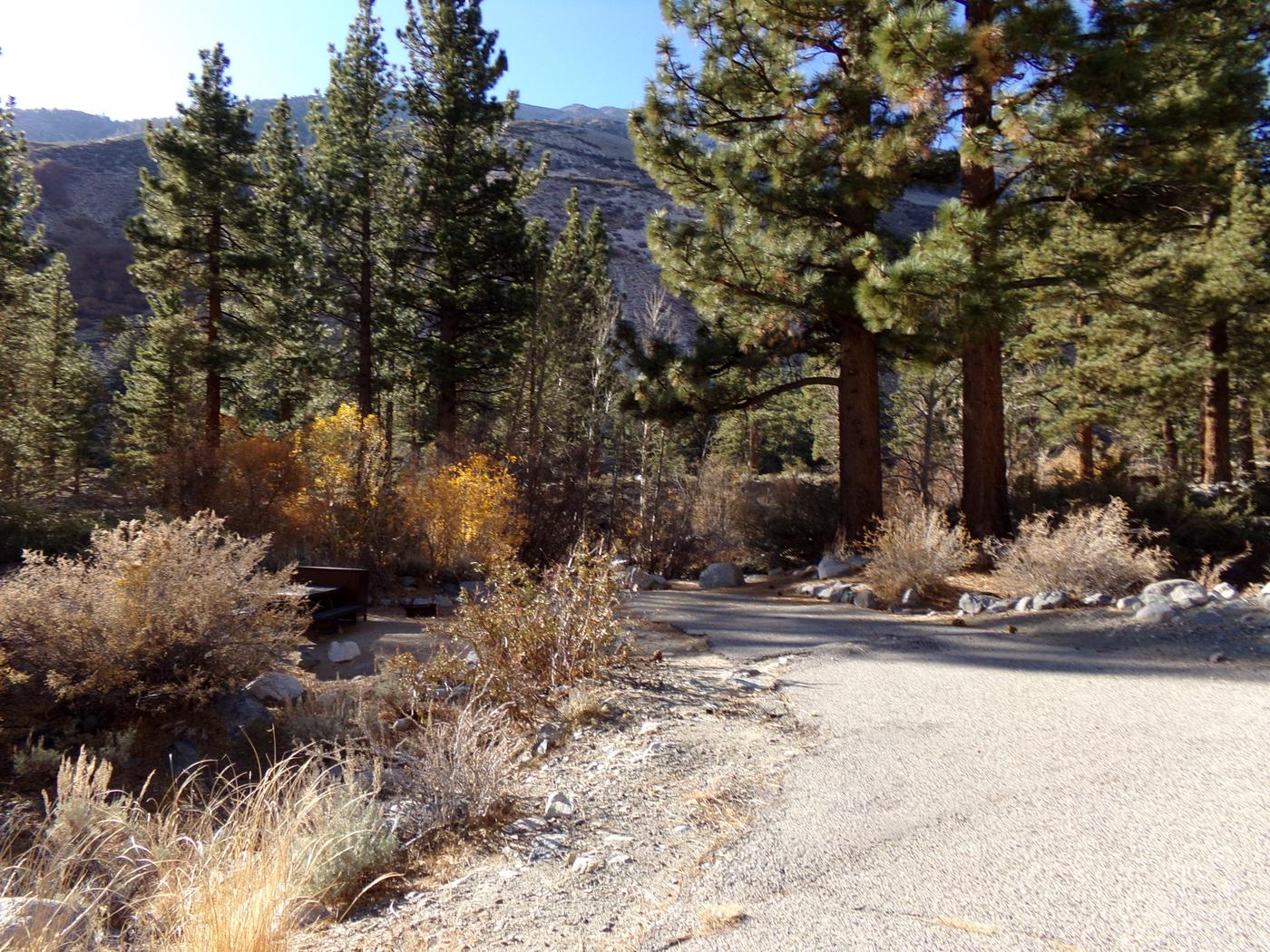 Wooded entrance and parking space for site #06, Upper Sage Flat Campground.