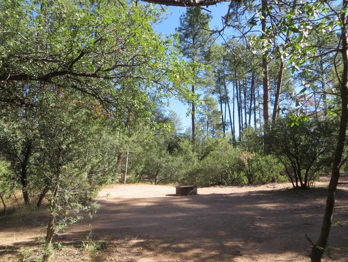 Houston Mesa, Black Bear Loop site #25 featuring large, wooded camping space and fire pit.