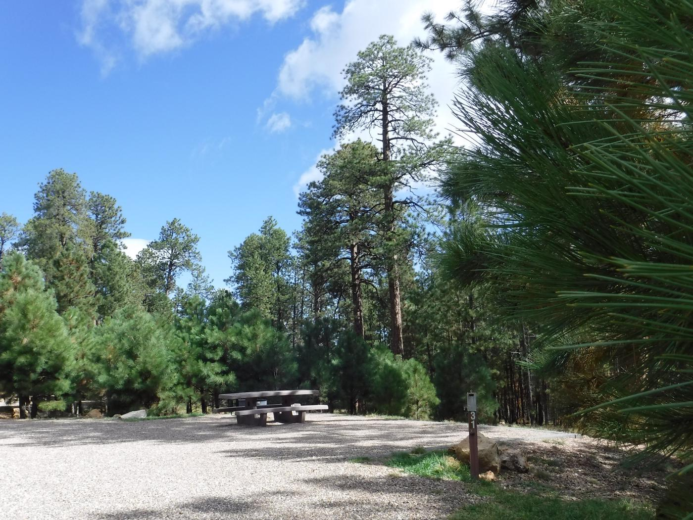 Jacob Lake site #31 featuring entrance, parking, and full camp space view.