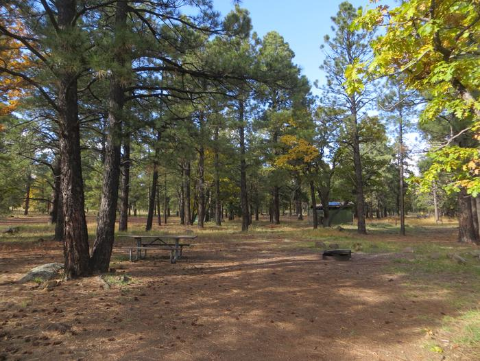 Little Eldon Springs Horse Camp site #01 featuring the wooded picnic area and fire pit.