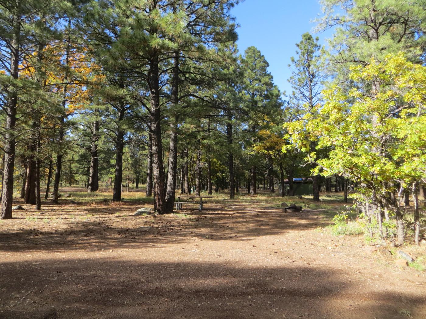 Entrance and parking to site #01, Little Eldon Springs Horse Camp.