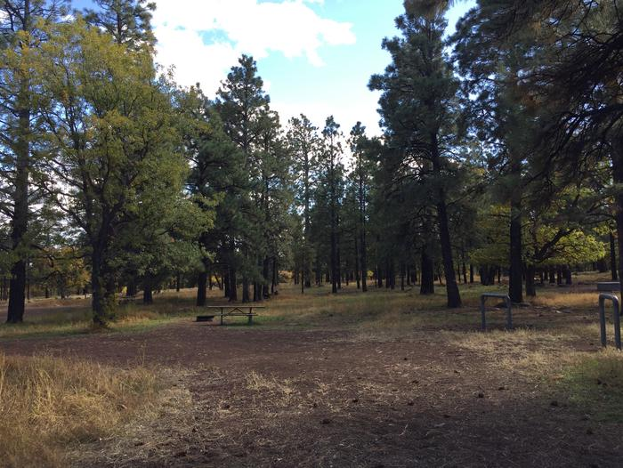 Little Eldon Springs Horse Camp site #11 with full view of wooded campsite, picnic area, and hitching post.