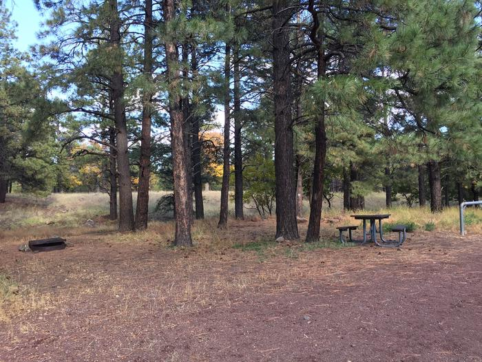 Little Eldon Springs Horse Camp site #12 with full view of wooded campsite, picnic area, and hitching post.