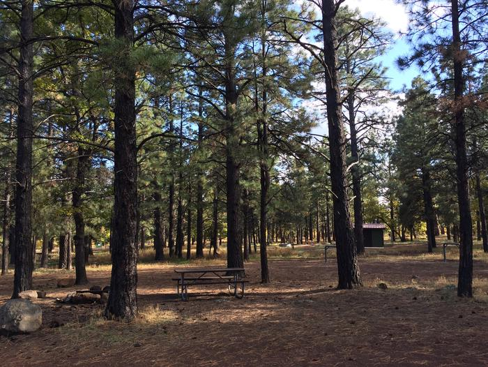 Little Eldon Springs Horse Camp site #14 with full view of wooded campsite, picnic area, and hitching post.