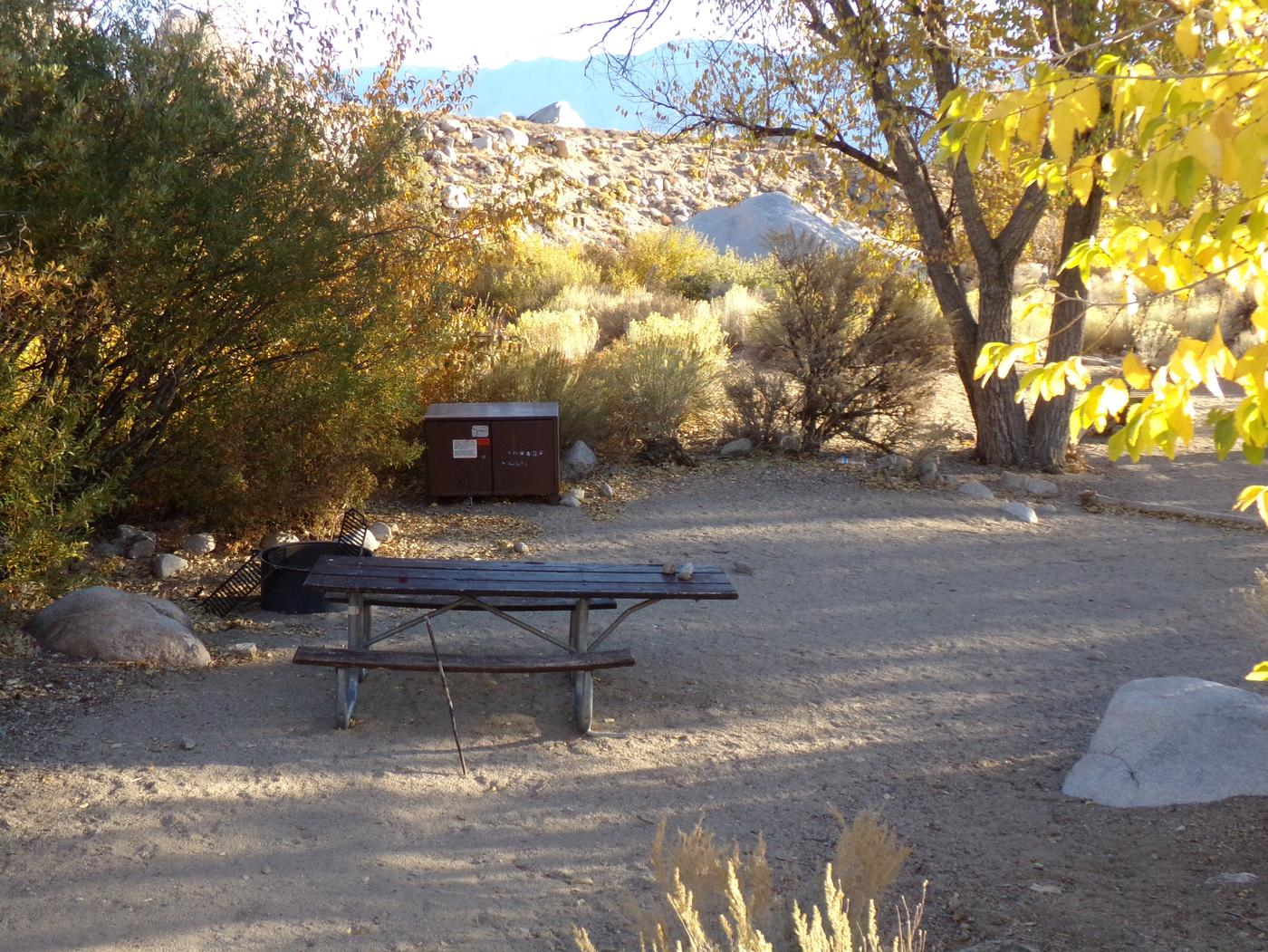 Lone Pine Campground site #14 featuring picnic area, food storage, and fire pit.