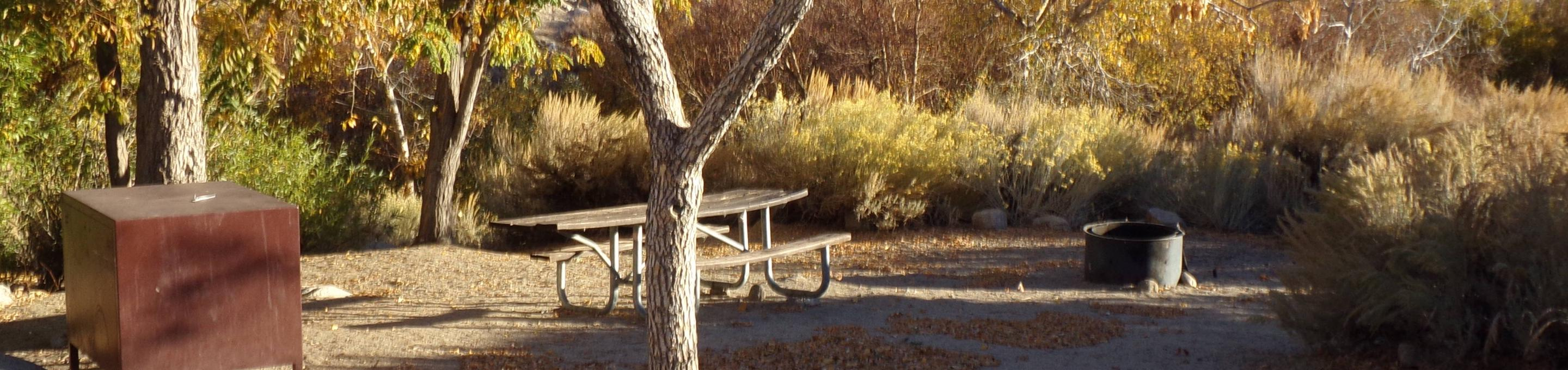 Lone Pine Campground site #22 featuring picnic area, food storage, and fire pit.
