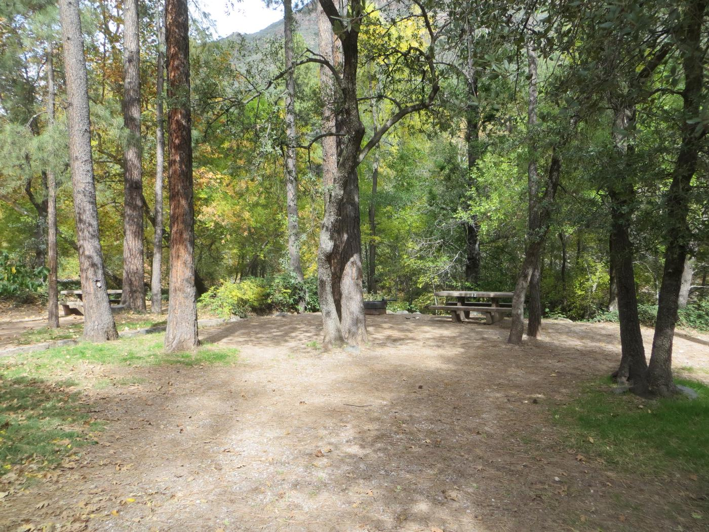 Manzanita Campground site #12 featuring the treed picnic area, camping space, and fire pit.