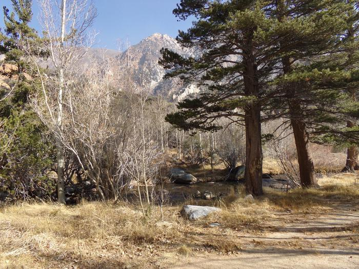 Camping spaces by the pathway to the creek that runs by Table Mountain Group Campground.