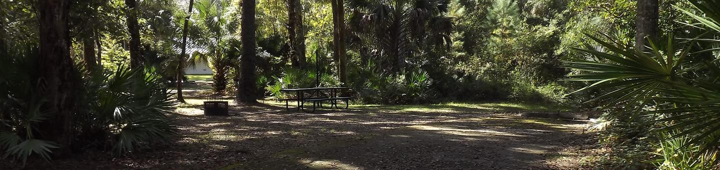 Juniper Springs Recreation Area site #12 tropical setting with picnic area and camping space.