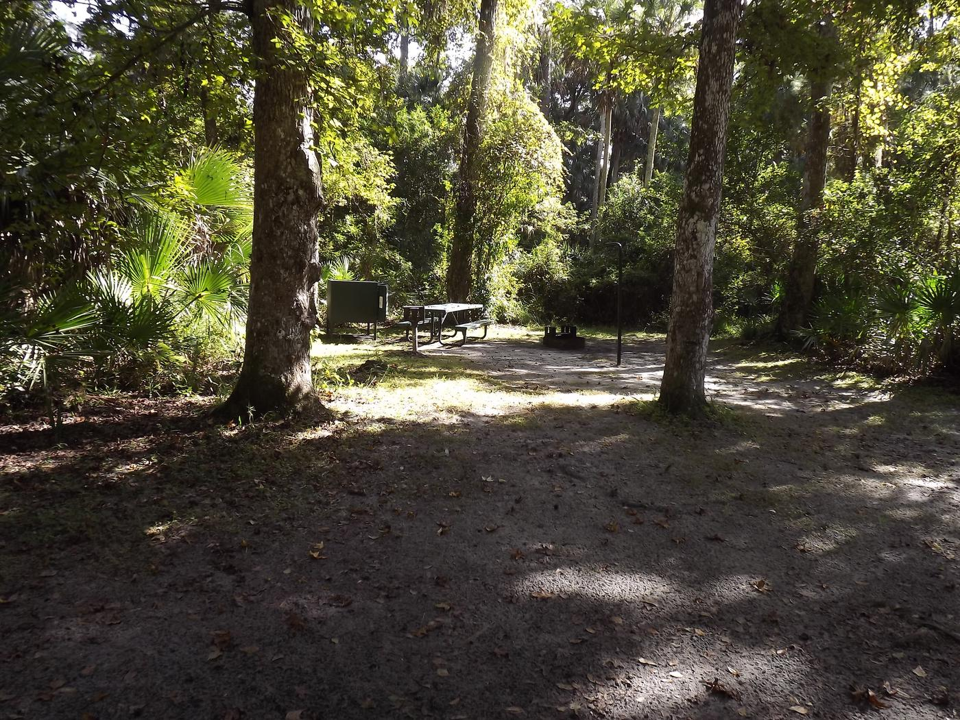 Juniper Springs Recreation Area site #66 tropical setting with picnic area and camping space.