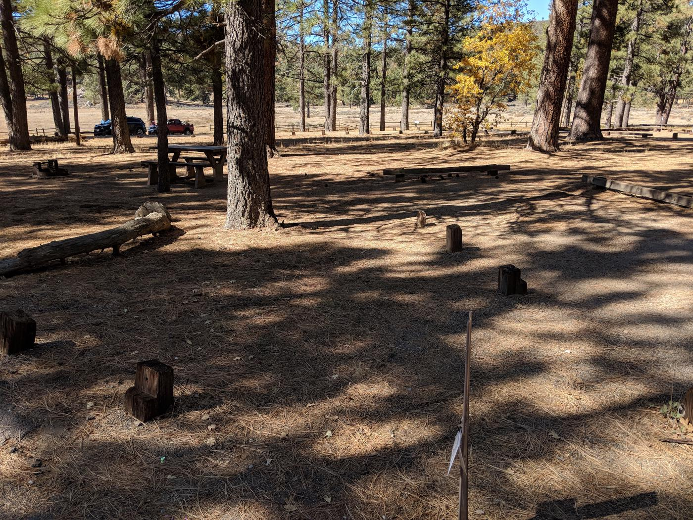 Laguna Campground site #16 wooded camping space view and picnic area.