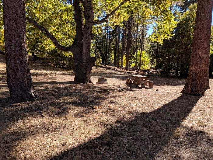 Laguna Campground site #94 wooded camping space view and picnic area.