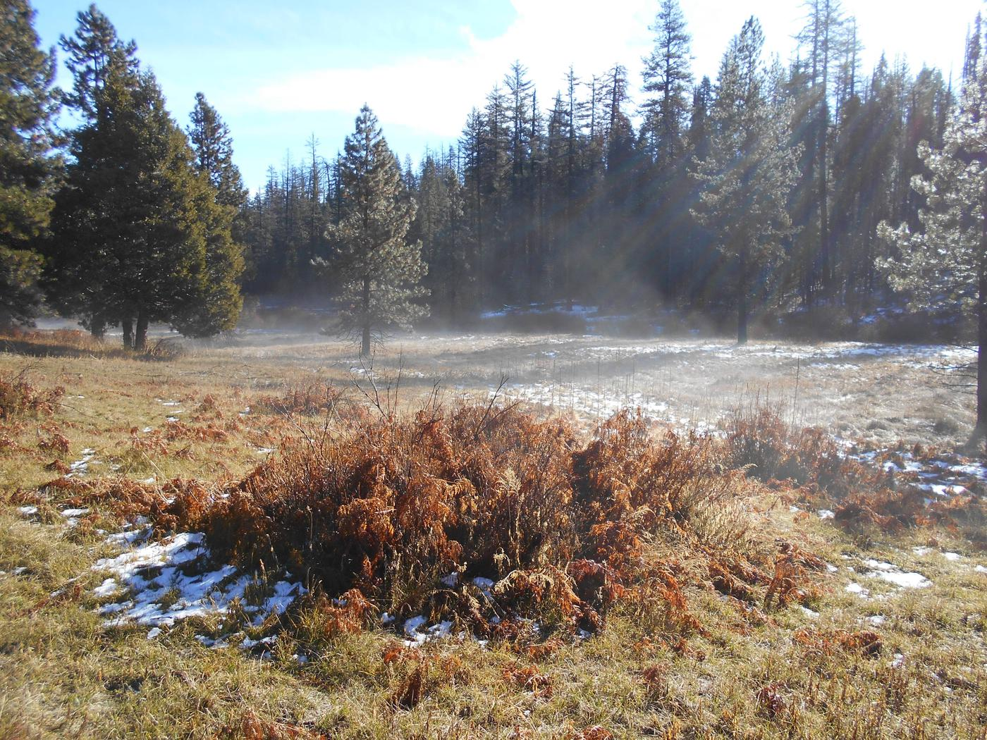 Hodgdon Meadow CampgroundMisty Winter Morning in Hodgdon Meadow