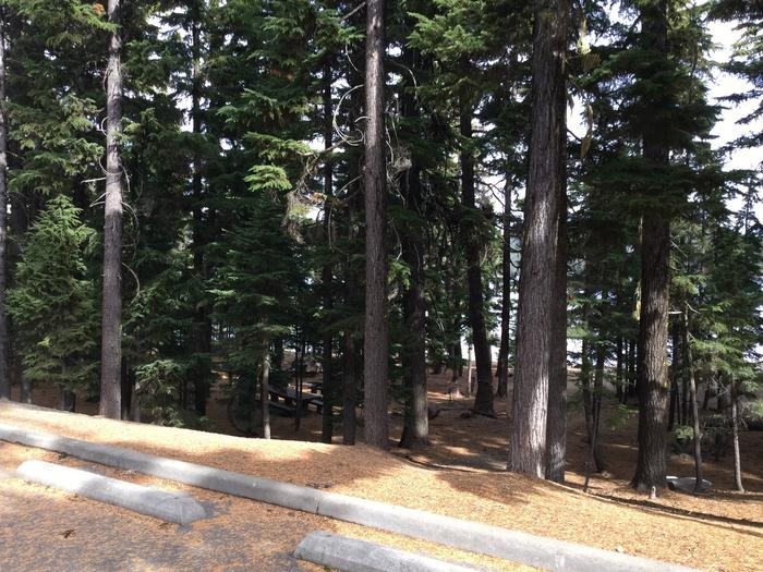 Site CNewberry Group Camp