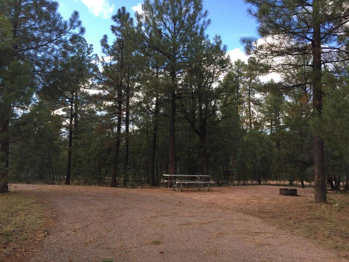 Sharp Creek Campground site #14 entrance, parking, and full camp space view among the trees.