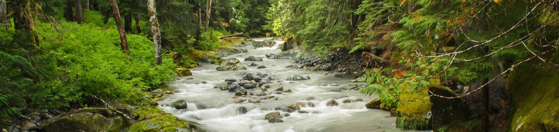 Ohanapecosh River, Mt Rainier NP