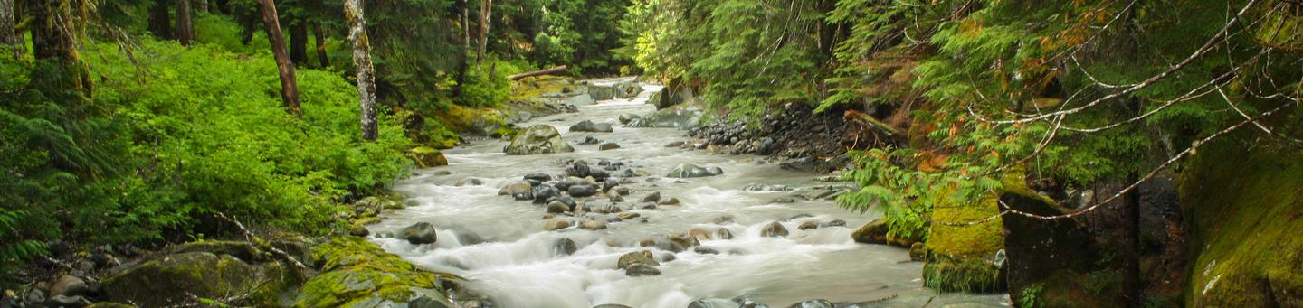 Ohanapecosh River, Mt Rainier National Park