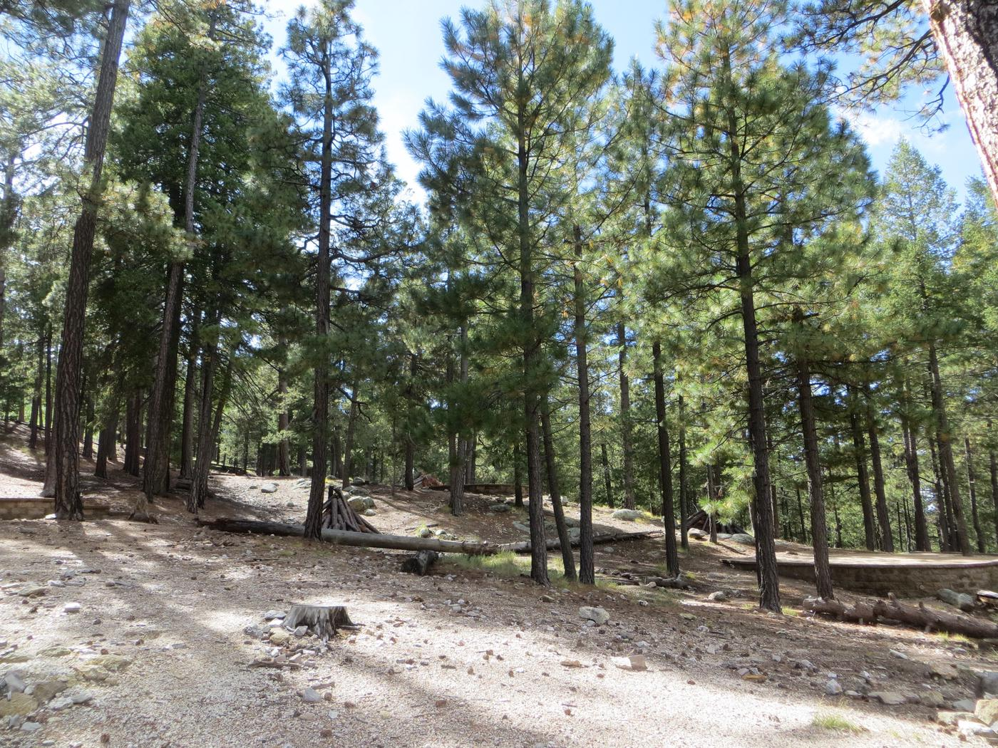 Large mountain side camping locations at Group Site #05, Whitetail Campground.
