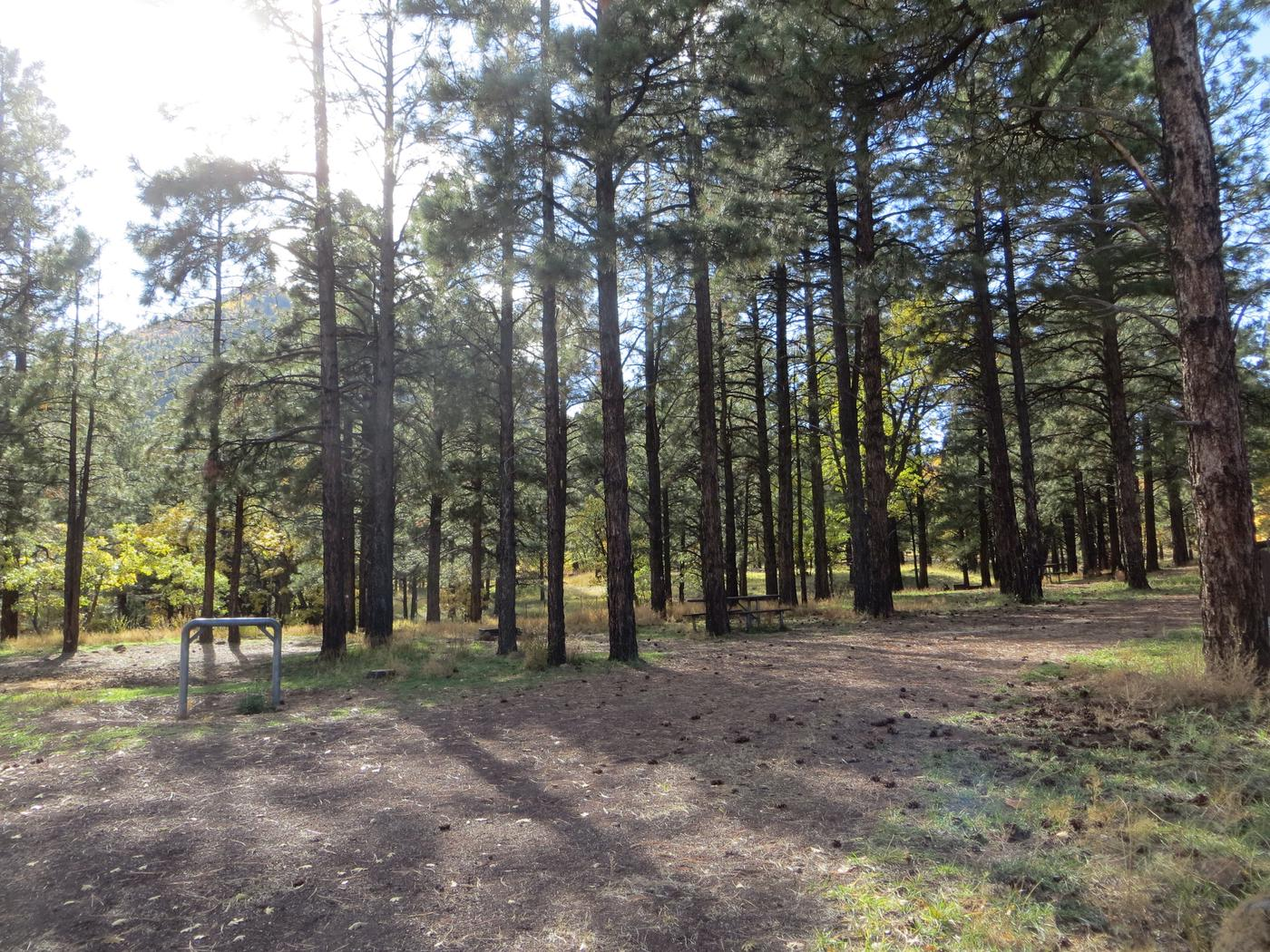 Little Eldon Springs Horse Camp site #04 with full view of wooded campsite, picnic area, and hitching post.