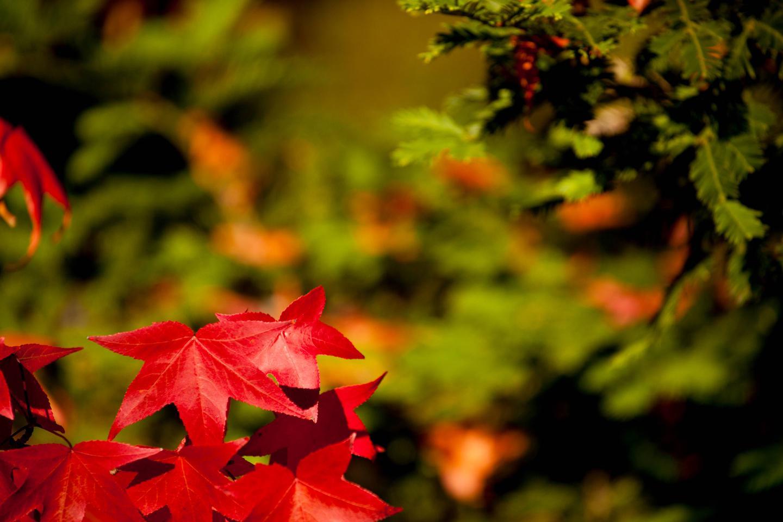 fall scenesfall color`