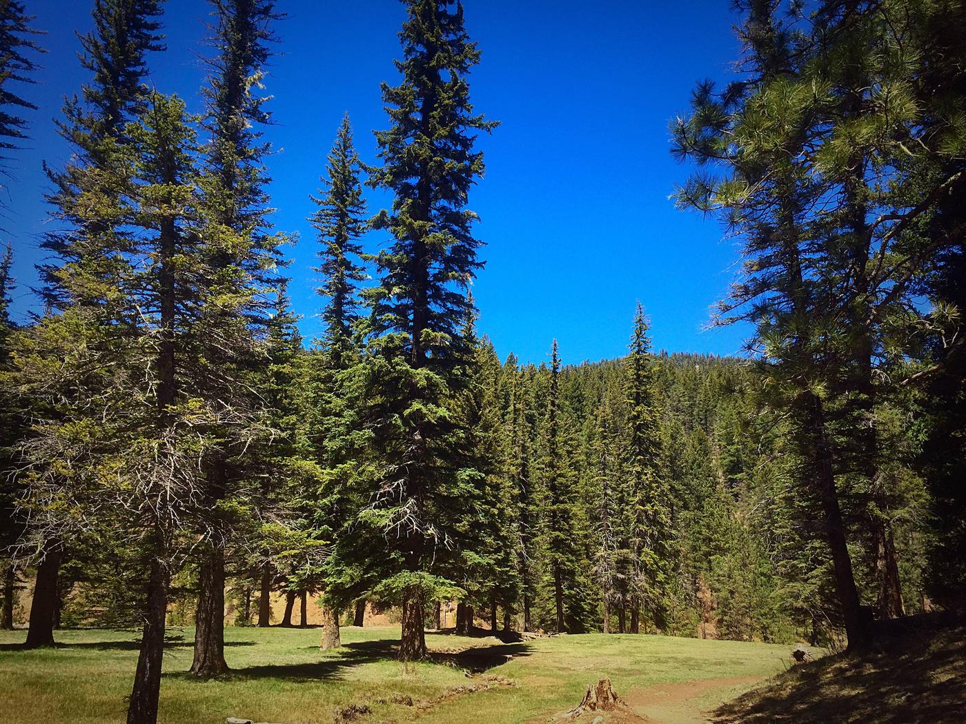 Bluff Springs campground, Lincoln National Forest