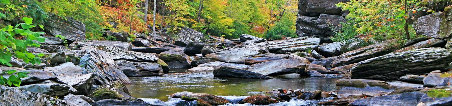 Fall foliage along the Tellico River in Cherokee National Forest