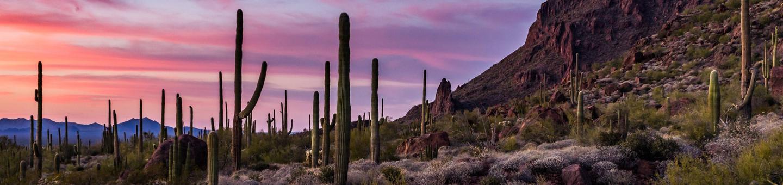 Ajo Desert