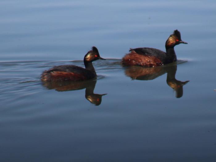 Benton Lake National Wildlife Refuge