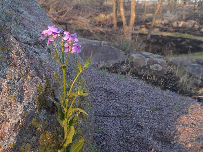 Big Stone National Wildlife Refuge