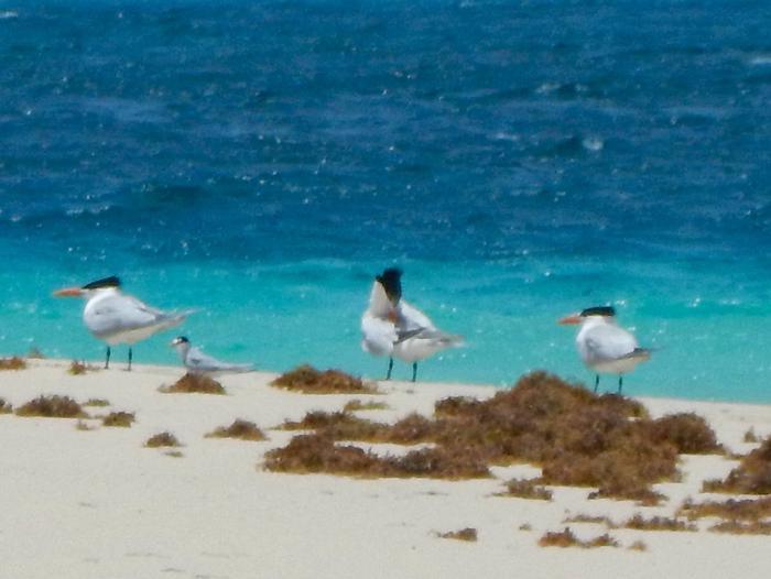 Buck Island National Wildlife Refuge