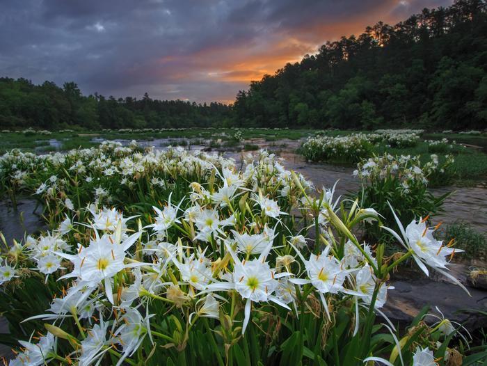 Cahaba River National Wildlife Refuge