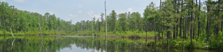Carolina Sandhills National Wildlife Refuge