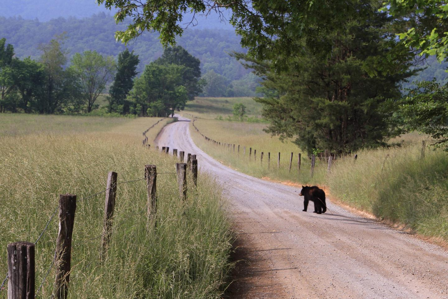Preview photo of Cades Cove Group