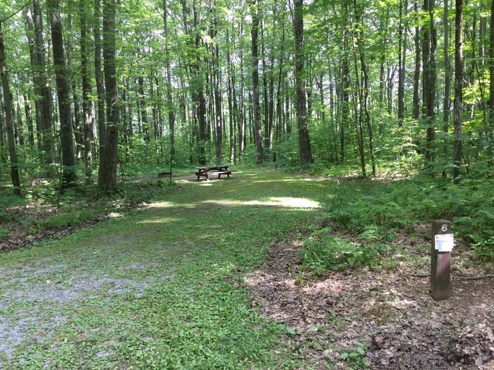 Tracy Ridge Recreation Area: Site 6