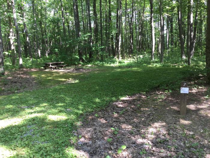 Tracy Ridge Recreation Area: Site 7