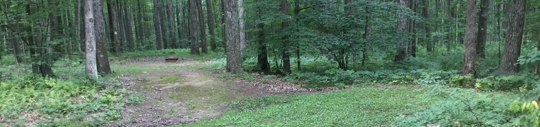 Tracy Ridge Recreation Area: Site 11