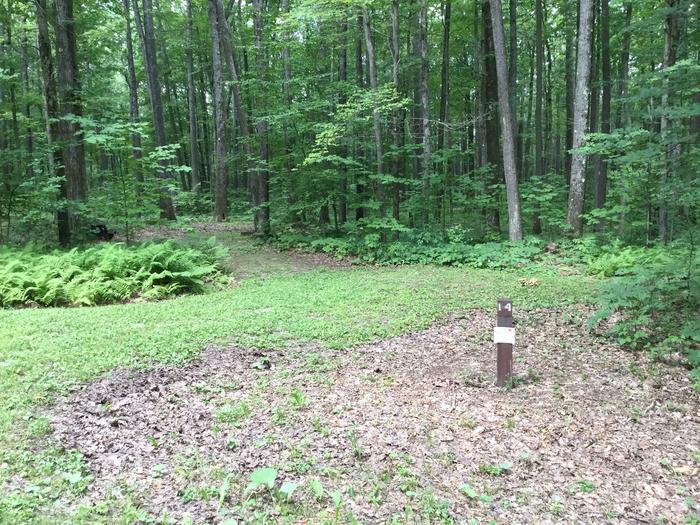 Tracy Ridge Recreation Area: Site 14