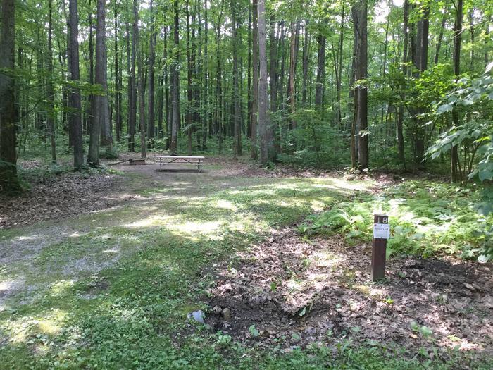 Tracy Ridge Recreation Area: Site 18