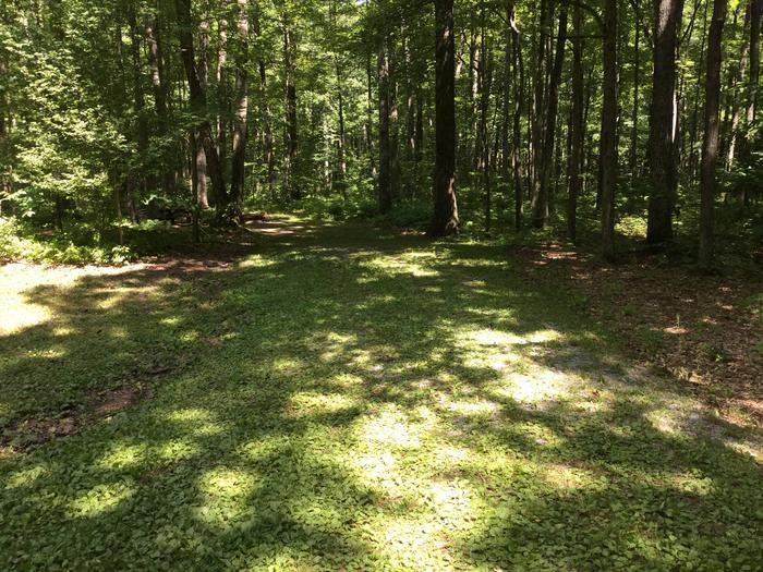 Tracy Ridge Recreation Area: Site 22
