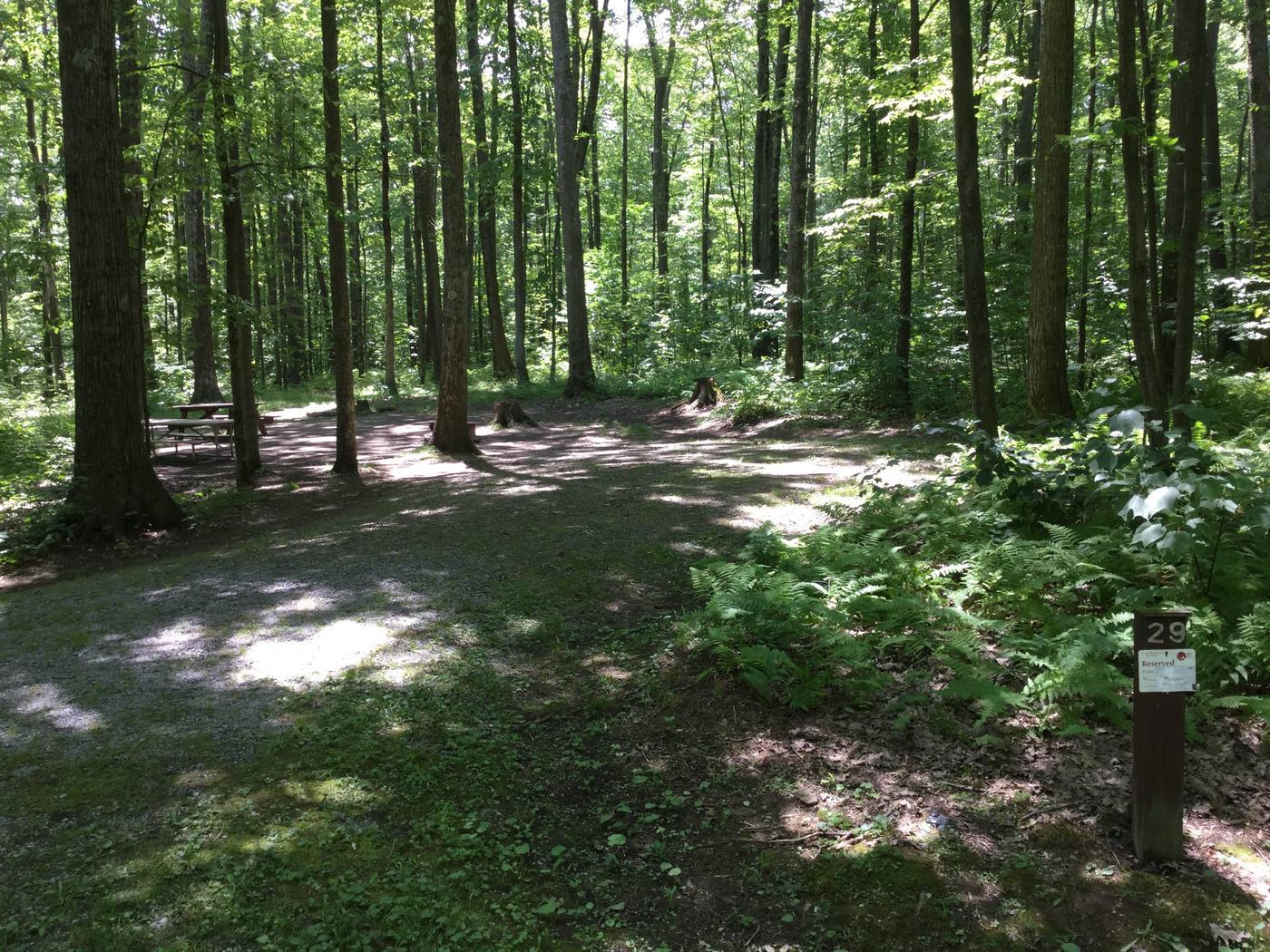 Tracy Ridge Recreation Area: Site 29