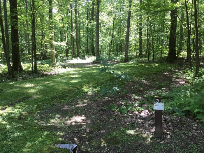 Tracy Ridge Recreation Area: Site 31