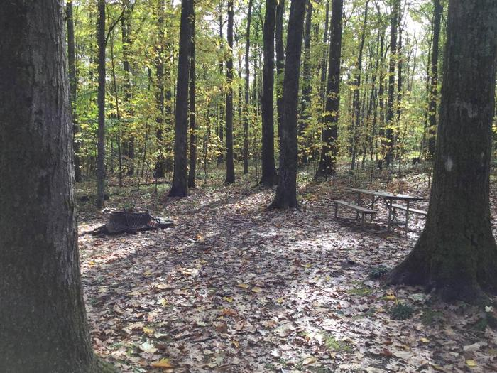 Tracy Ridge Recreation Area: Site 25