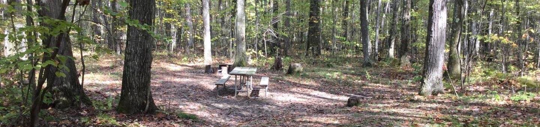 Tracy Ridge Recreation Area: Site 35