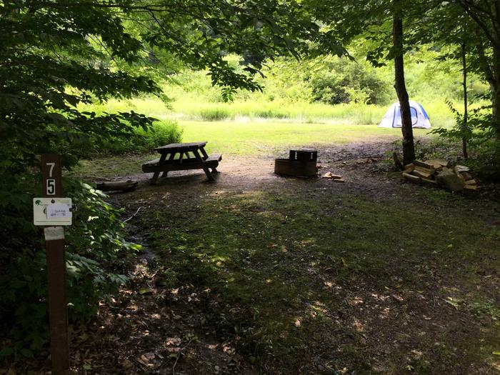 Willow Bay Recreation Area: Site 75