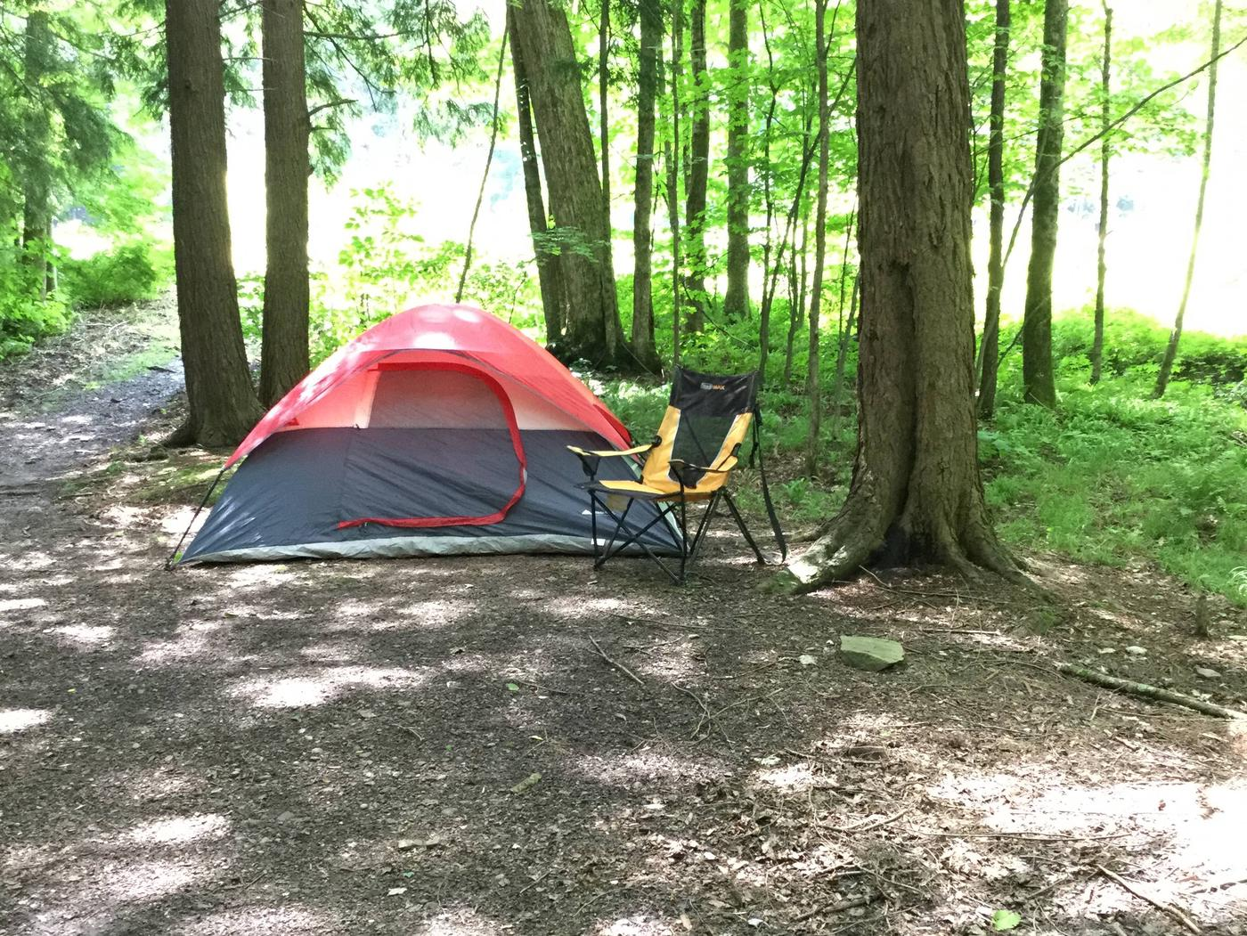 Willow Bay Recreation Area: Site 79