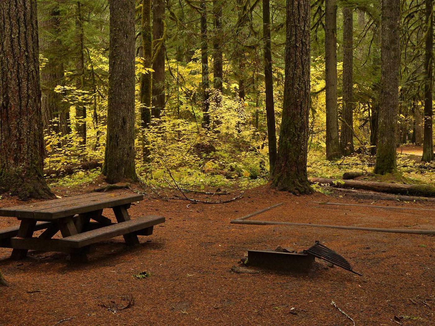 Paradise Creek campsite