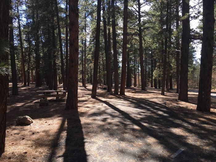 Picnic table, fire pit, and driveway for North Rim Campground, Site 3.