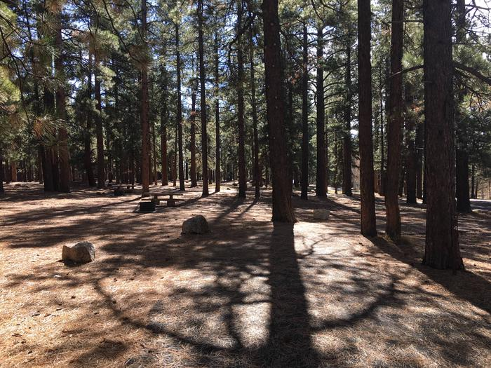 Picnic table, fire pit, and driveway for North Rim Campground, Site 4.