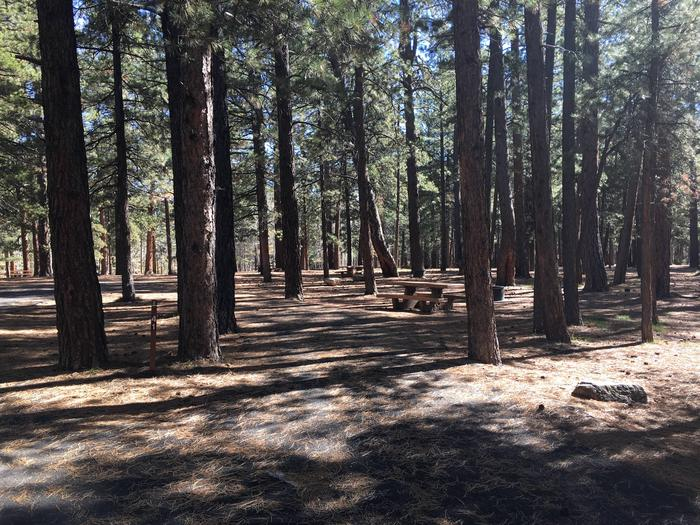 Picnic table, fire pit, and driveway for North Rim Campground, Site 41.